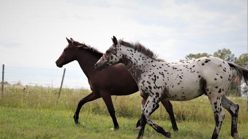 egua paint a venda