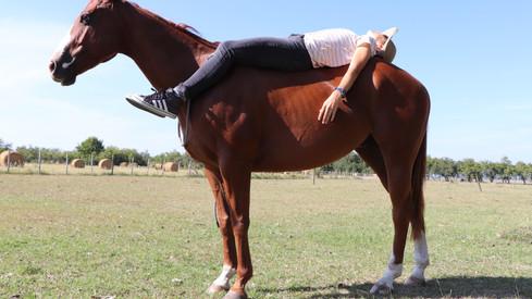 caballo manso de andar