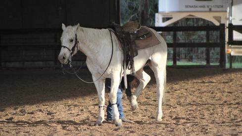 caballo manso de trabajo
