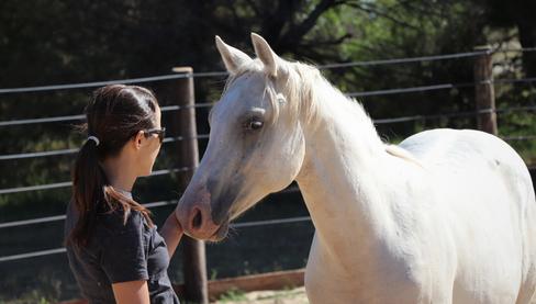 caballo appaloosa.