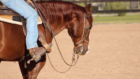 caballo cuarto de milla en venta