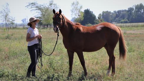 caballo castrado raza appaloosa