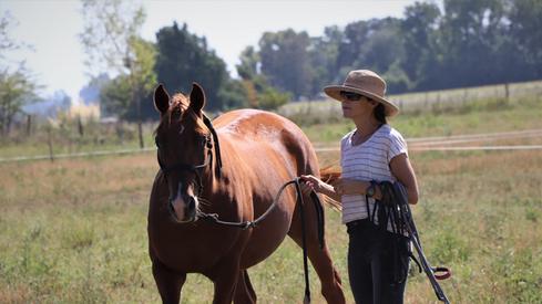 caballo appaloosa en venta