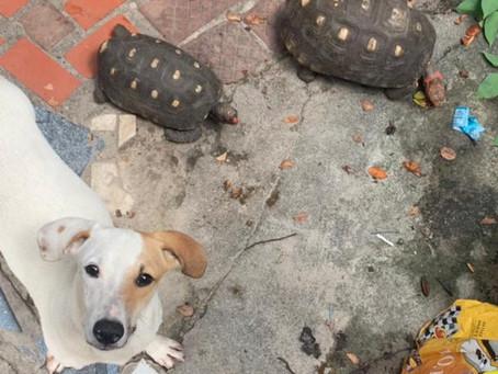 Animais, vítimas de maus tratos, são resgatados em Bento Ribeiro