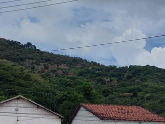 """""""Cinturão verde"""" de Jardim Sulacap passa por reflorestamento"""