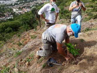 Sulacap recebe o plantio de 4.720 mudas para reflorestamento
