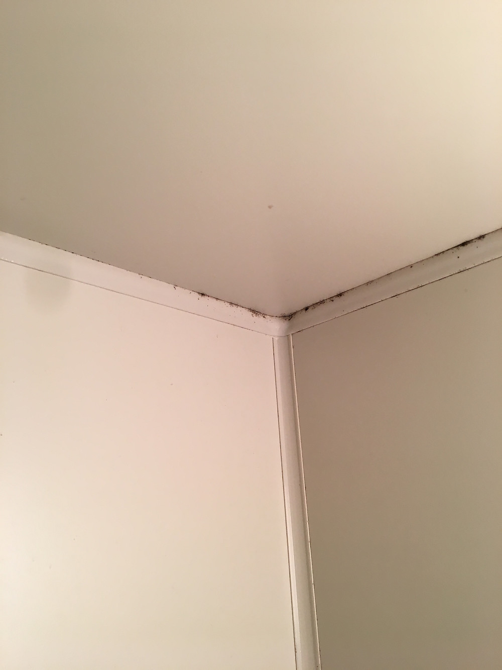 浴室天井のカビ清掃前