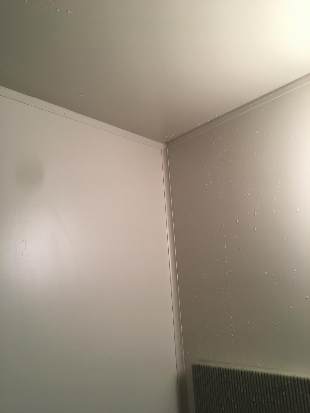 浴室天井のカビ清掃後