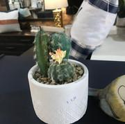 Pot and fake cacti