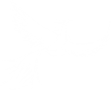 Phoenix1.png