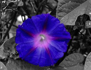 Purple haze.jpg