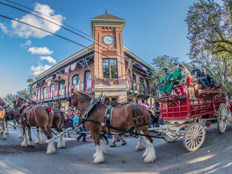 Budweiser Clydesdales visit Downtown Ocean Springs, MS 2020