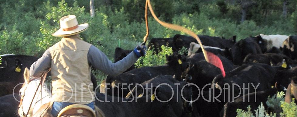 Stock Whips, Bull Whips, Snake Whips for Working Cowboys