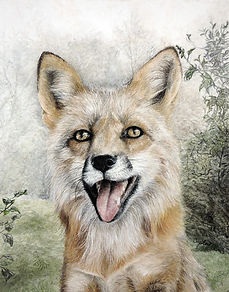 Smiling fox origial pastel from Crystal Clarke