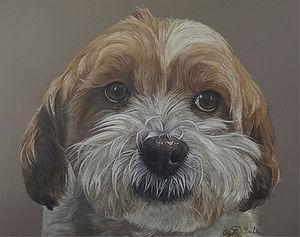 pet-portrait-dog.jpg