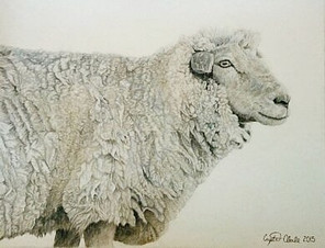 The Tale of the Woolly Sheep
