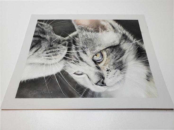 Kitten Original