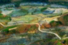rice fields1.jpg