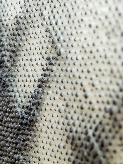 Oldie - detail
