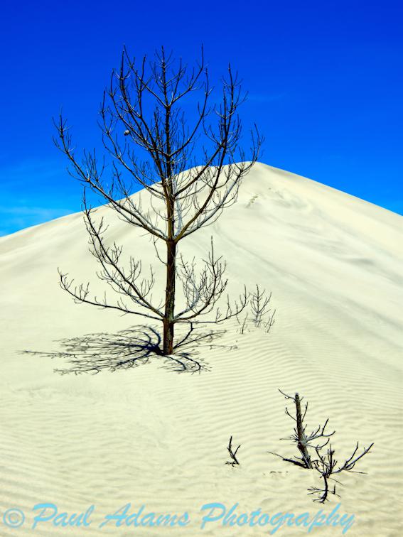 Buried Trees