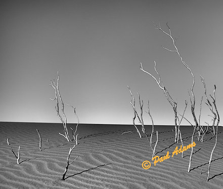Skeleton Trees, Death Valley, CA