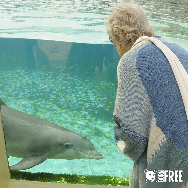 Virginia Mckenna visiting tragic dolphins of Marineland