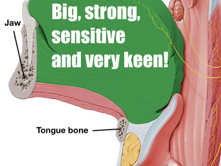 The Tongue: Big, strong, sensitive and very keen!