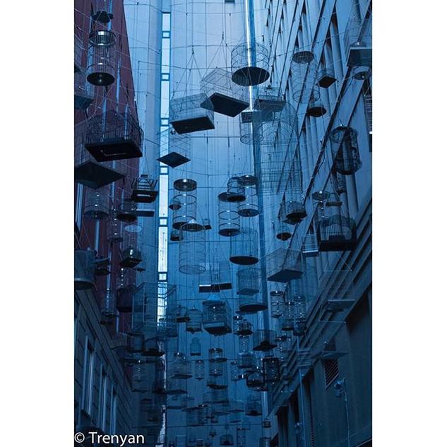 Birdcage City