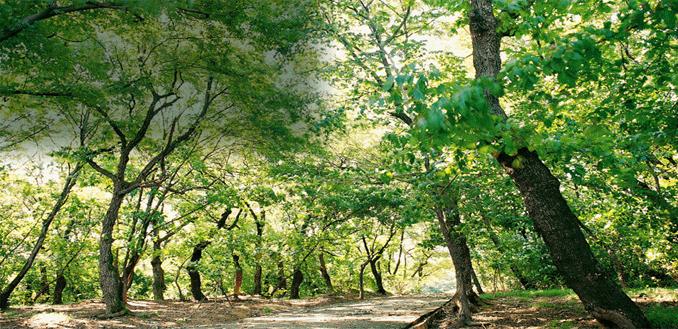 자인계정숲
