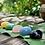 Thumbnail: Rough Stone Set for Chakra Healing -Advanced Level