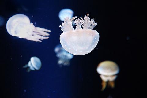 free lesson plan and resources vertebrates invertebrates