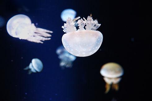 Maneter i Akvariet