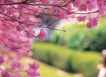 Korea's Spring Season - When & Where to Go | KoreaToDo