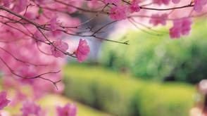Le grand ménage de printemps : une hygiène mentale et énergétique