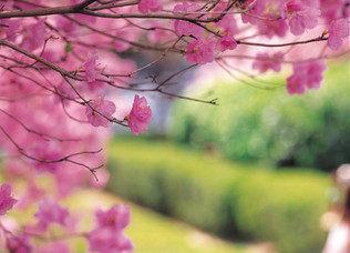 Living in rhythm with spring