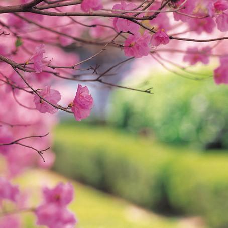 Le retour du printemps renaissance , bonnes nouvelles et faire le choix de s'orienter vers la vie !