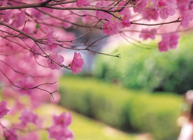 Au printemps : un maître-mot, la tempérance