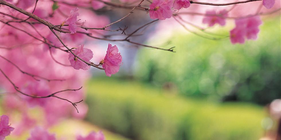 60th Anniversary of Alaska Statehood & Cherry Blossom Festival  (1)