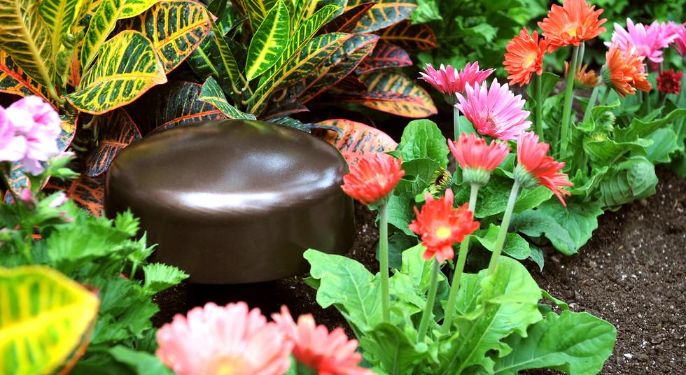 Mushroom Cap Flowers.jpg