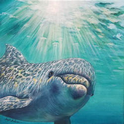 Dolphin Underwater Bonus Video