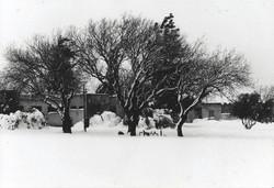 האלות בדשא המרכזי 1991  בשלג