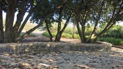 עצי החרוב  בטיילת