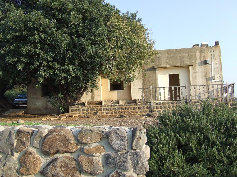 הבית הסורי- עץ חרוב