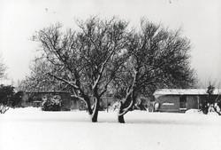 1991 האלות בשלג