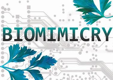 выставка, биомимикрия, omelchenko gallery, галерея омельченко