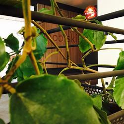 Projet végétal dans des bureaux