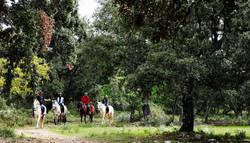 Ruta a caballo por el bosque