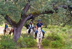 Rutas guiadas por el bosque mediterráneo