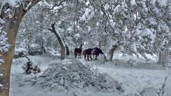 El invierno en Paddock Paradise Ronda