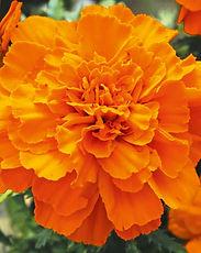 TAG_Texana_Orange_479580.jpg